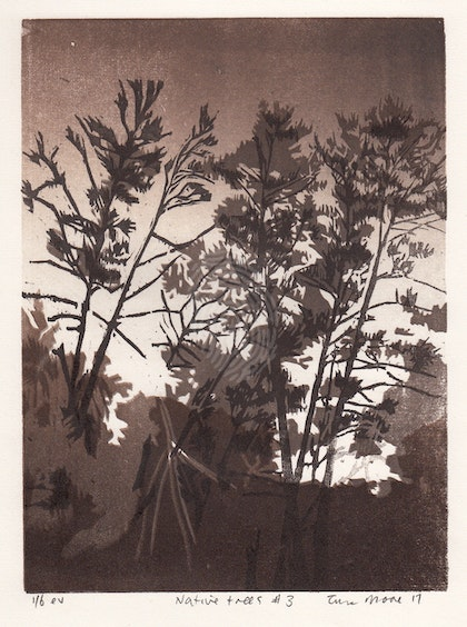 Native pines#3 Ed. 6 of 6