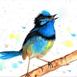 Blue wren linda hammond bluethumb art 4218