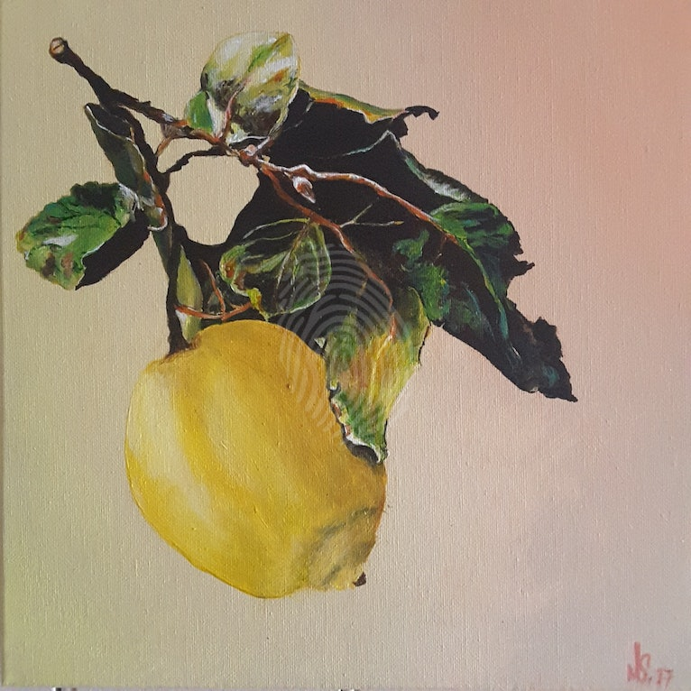 A solitary rich yellow lemon hangs with the rich texture and greens of it leaves