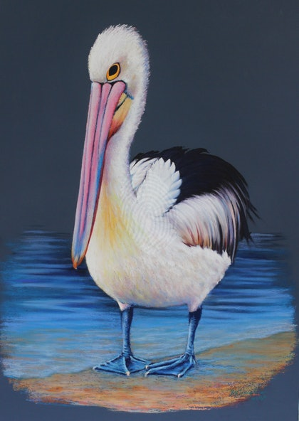 Pelican; 'Sexy and She know's it'