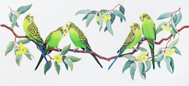 Branch party - Budgerigars