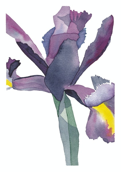 Close Up of an Iris, No.2 Ed. 2 of 50