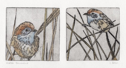 Emu-wren twin plate (Etching, Unique State)
