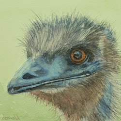 Emu peter macdonald bluethumb art c0b8