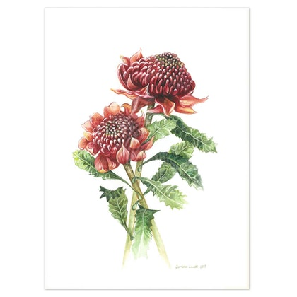 Australian Waratah Watercolour painting - Limited edition print Ed. 50 of 100