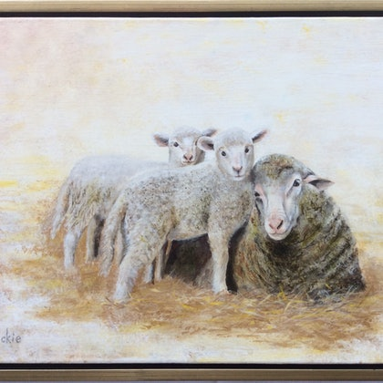 Dawn - mother of lambs