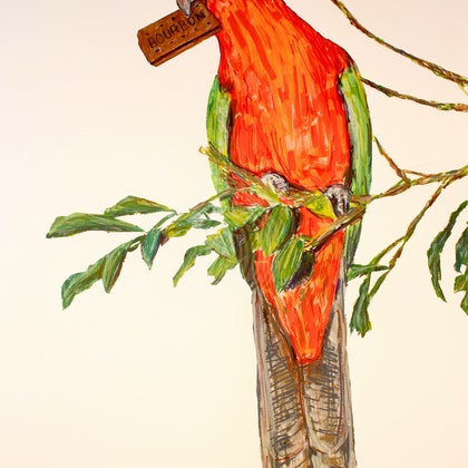 KING PARROT WITH BOURBON BISCUIT