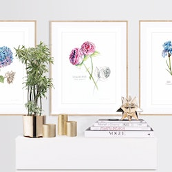 Botanical collection 5 watercolour paintings limited edition prints darlene lavett bluethumb art 09cf.jpeg?w=250&h=250&fit=crop&mark=https%3a%2f%2fimages.bluethumb.com.au%2fbluethumb art assets%2fwatermark%2fbt watermark