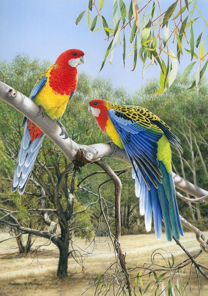 """Heatwave"" (Eastern Rosellas) LIMITED EDITION GICLEE PRINT Ed. 3 of 10"
