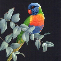 Rainbow lorikeet lyn cooke bluethumb art 471d