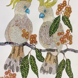 The bird id the word sulphur crested cockatoos jude willis bluethumb art 50c8