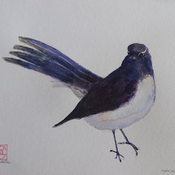 Willie wagtail colin l williams bluethumb art cac8