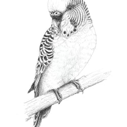 Little budgie jess black bluethumb art a041.jpg?w=250&h=250&fit=crop&mark=https%3a%2f%2fimages.bluethumb.com.au%2fbluethumb art assets%2fwatermark%2fbt watermark