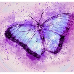 Butterfly isabelle caille bluethumb art 3077
