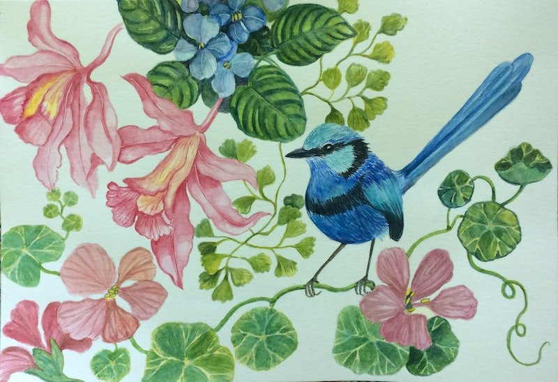Melody in blue: Fairy Wren