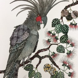 I ve got million dollar charm palm cockatoo jude willis bluethumb art a09c