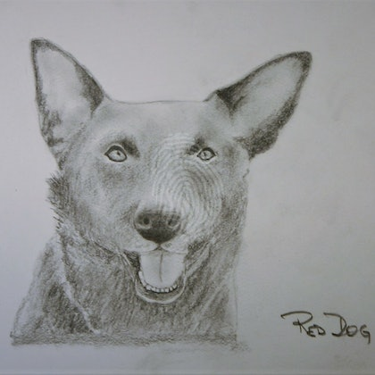 Red Dog etching