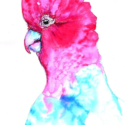 Galah Quick Study 02 April 2018 in Ink Unframed 21 by 29cm