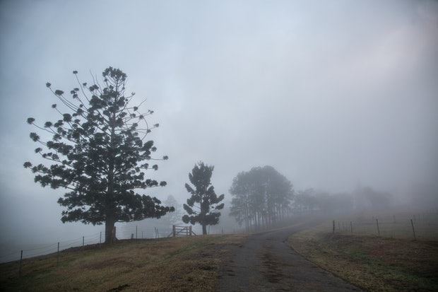 Country road in the morning