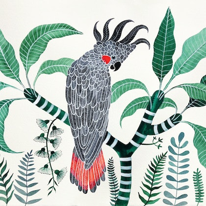 Black Cockatoo in Emerald Forest