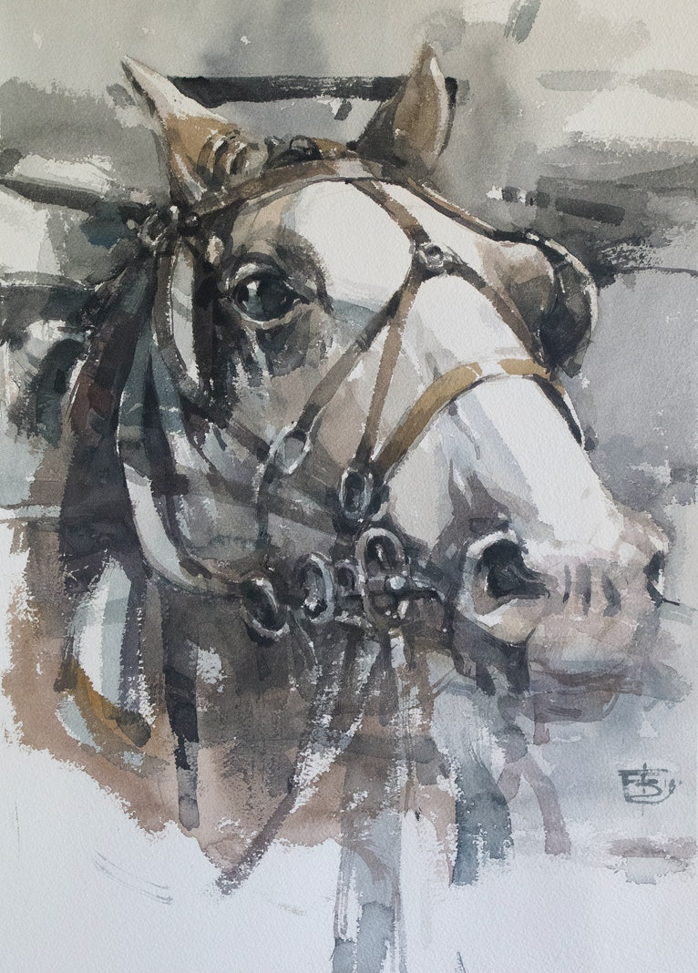 Horse with Blinders