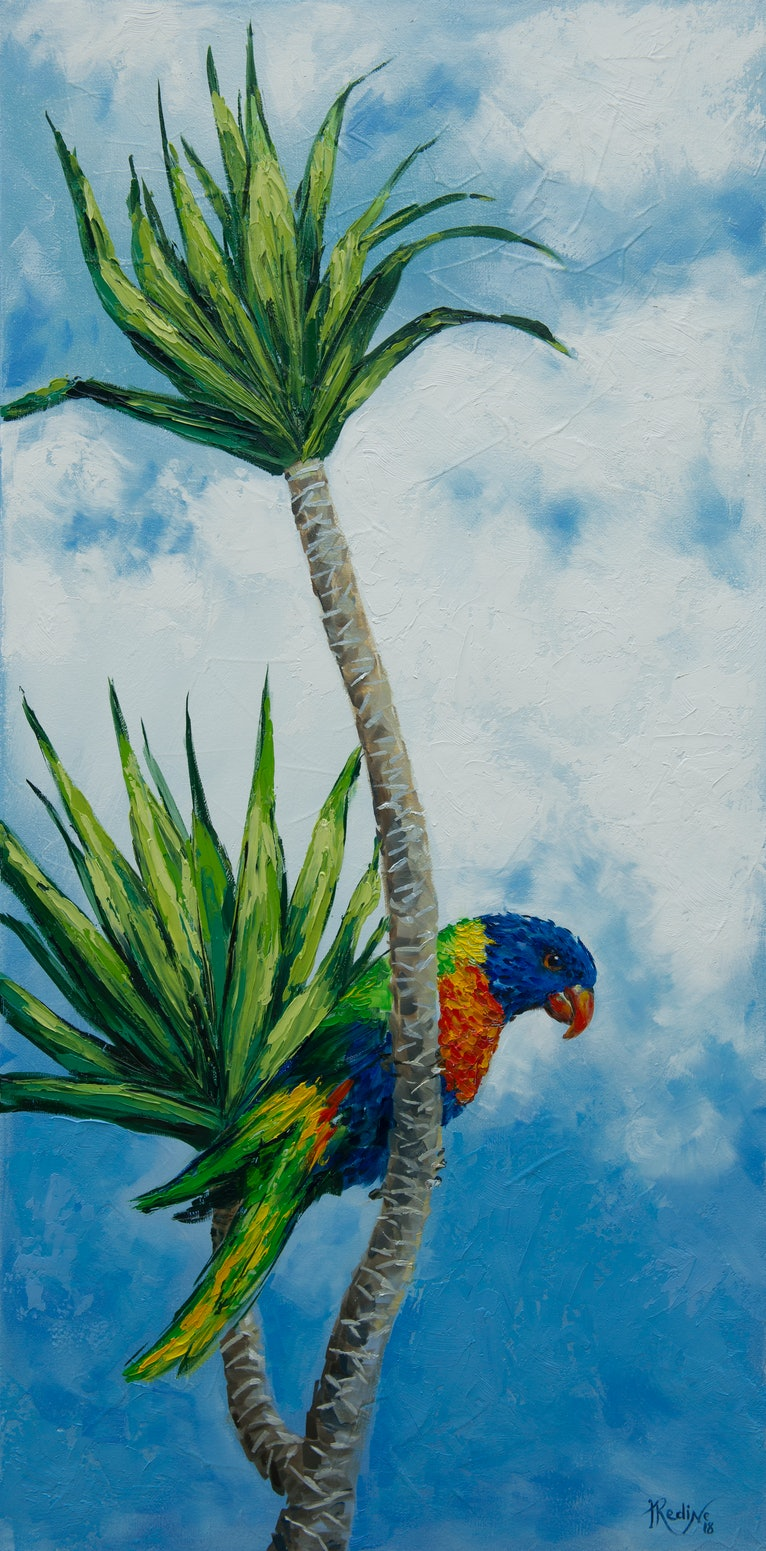 Somewhere in the clouds. Rainbow lorikeet