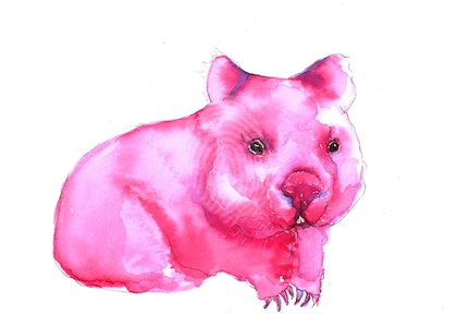 Wombat Quick Study in Ink and Pen