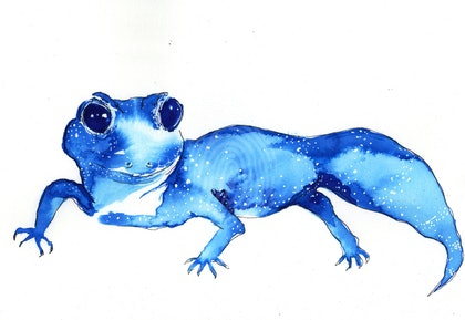 Quick Gecko Study in Ink on Arches 300gsm