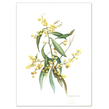 Australian Wattle Watercolour painting - Limited edition print - Large Framed Ed. 51 of 100