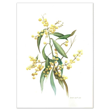 Australian Wattle Watercolour painting - Limited edition print - Large Framed Ed. 52 of 100