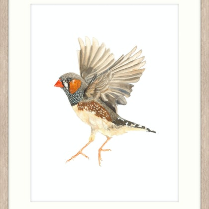 Framed Zebra Finch II Large - Framed Ed. 2 of 10