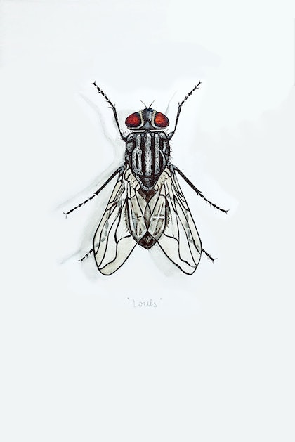 Portrait of a House Fly named Louis