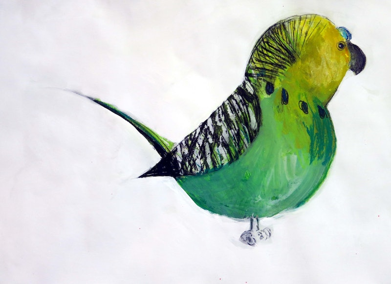 budgie by john graham paintings for sale bluethumb online art