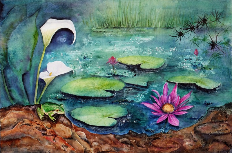 The Frog S Pond By Michelle Henderson