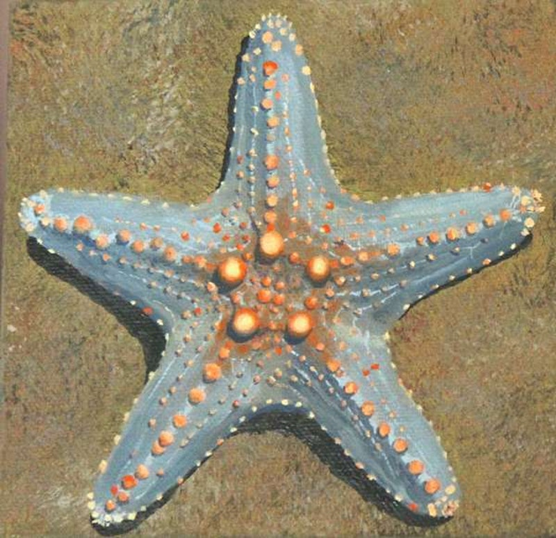 grey sea star by julie cane paintings for sale bluethumb online