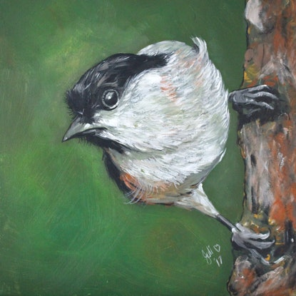 (CreativeWork) Marsh Tit - Small Bird on Tree by julie hollis. Acrylic Paint. Shop online at Bluethumb.