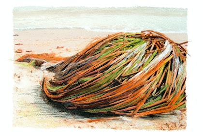 (CreativeWork) Sea Hair by Ellen Howell. mixed-media. Shop online at Bluethumb.