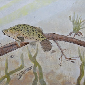 (CreativeWork) Cods life in the Murray  by wendy Owen. oil-painting. Shop online at Bluethumb.