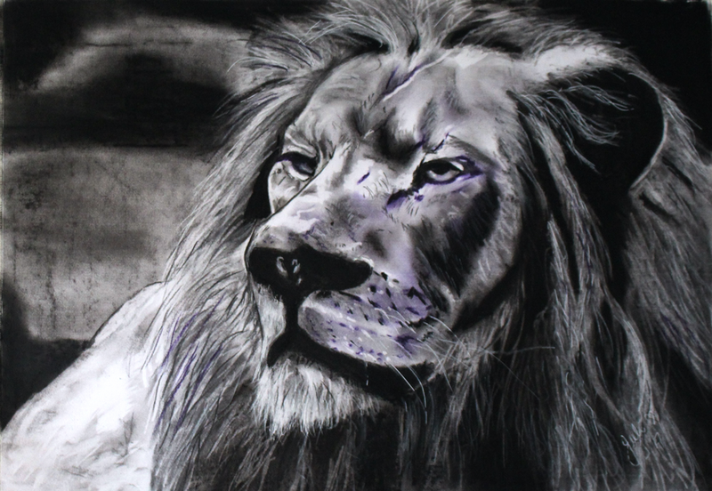 (CreativeWork)  Lion in Charcoals by Julie Hollis. drawing. Shop online at Bluethumb.