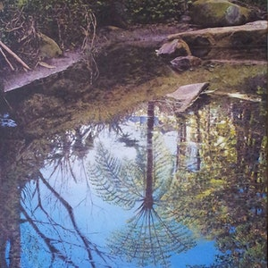 (CreativeWork) French forest, Sydney by francois olivier. arcylic-painting. Shop online at Bluethumb.