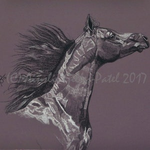 (CreativeWork) Aubergine Arabian V by Ainslie Gilles-Patel. drawing. Shop online at Bluethumb.