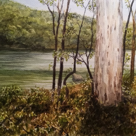 (CreativeWork) John Forrest national park by Ivan McClennan. Watercolour Paint. Shop online at Bluethumb.