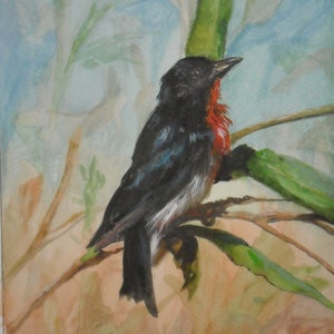 (CreativeWork) FLOWERPECKER - AUSTRALIAN BIRDS by Hesh Fernando. watercolour. Shop online at Bluethumb.