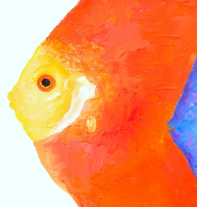(CreativeWork) Discus Fish pair by Jan Matson. Oil Paint. Shop online at Bluethumb.