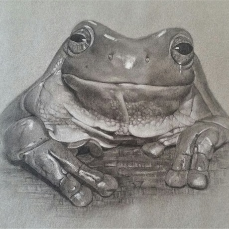 (CreativeWork) The Posing Frog by Sharyn Talbot. Drawings. Shop online at Bluethumb.