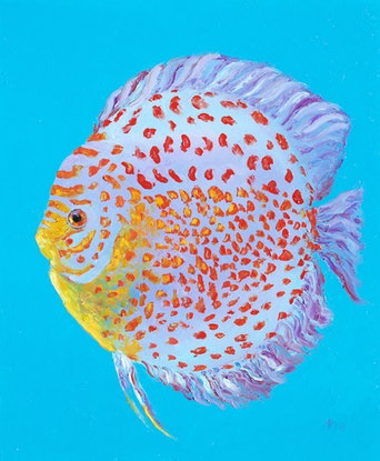 (CreativeWork) Spotted Discus Fish by Jan Matson. Oil Paint. Shop online at Bluethumb.