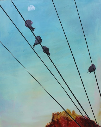Galahs on the Powerline