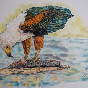 (CreativeWork) fish eagle by Hiten Mistry. drawing. Shop online at Bluethumb.