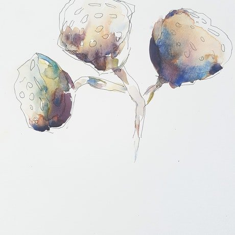 (CreativeWork) Lotus pods by Amanda Cutlack. Watercolour Paint. Shop online at Bluethumb.