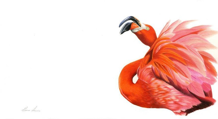 (CreativeWork) Red Flamingo Limited Edition Print by Alana Jones. Drawings. Shop online at Bluethumb.
